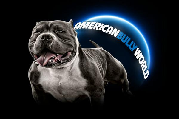 american bully breed answers